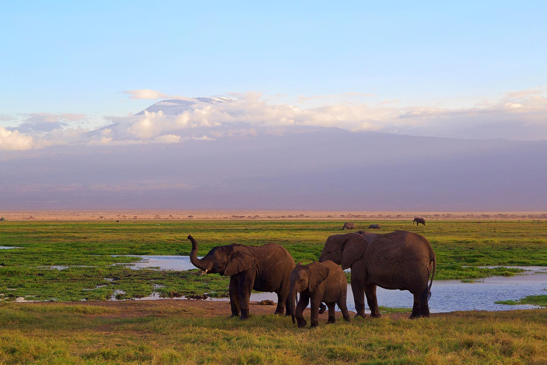 Seguridad en el Safari