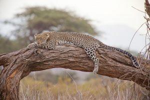 Główne atrakcje w Kenii